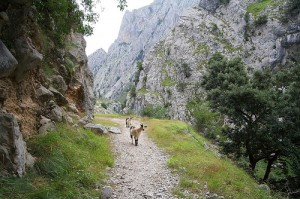 Cares Gorge in Asturias by Ben Curtis