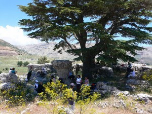 Tannourine Cedar Reserve in Lebanon