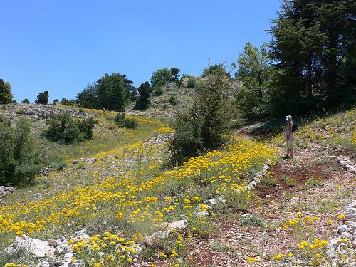 Tannourine Cedar Reserve on the Lebanon Mountain Trail