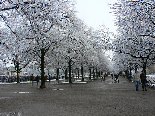 Snow in the Hofgarten in Munich