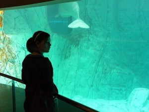 Glass Underwater tunnel L'Oceanographic