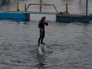L'Oceanographic Dolphin Show