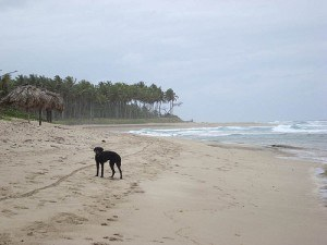 Playa Encuentro Beach in the Dominican Republic