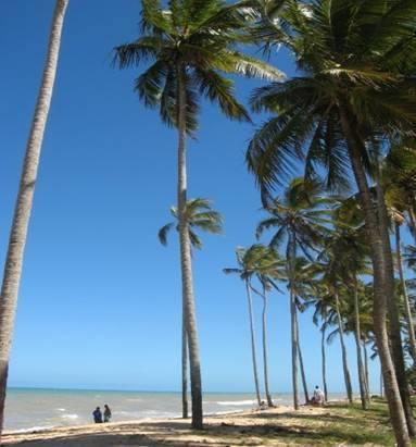Typical Bahian Beach (Photo by Modi)