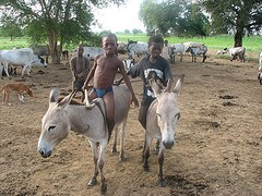 Boys on donkeys in Wiaga, Ghana