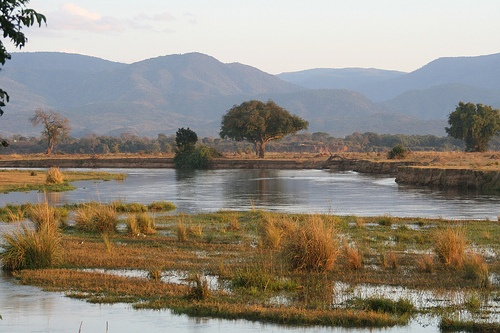 Zambezi river mana pools