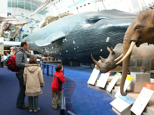 Mammals Gallery at the Natural History Museum, London Photo: Heatheronhertravels.com