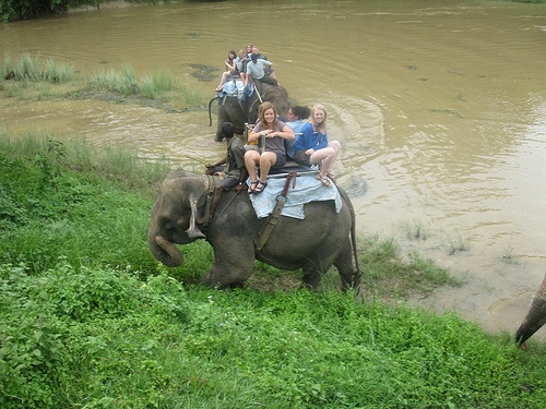 Elephants in the river in Chitwan,  Nepal