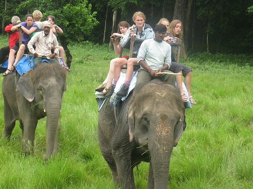Image result for elephant back safari in chitwan