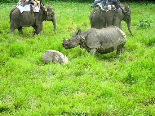 Rhino with baby in Chitwan, Nepal