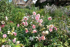 Dahlias at Hidcote Manor Gardens Photo: Heatheronhertravels.com