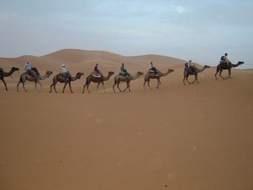 Camel guided tours in Sahara Photo: Tom Volpe