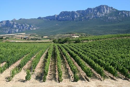 Vineyard in La Rioja