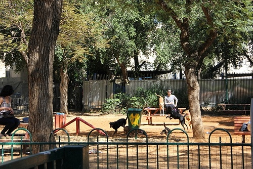 Dog Park in Tel Aviv Photo: Sally Hunt