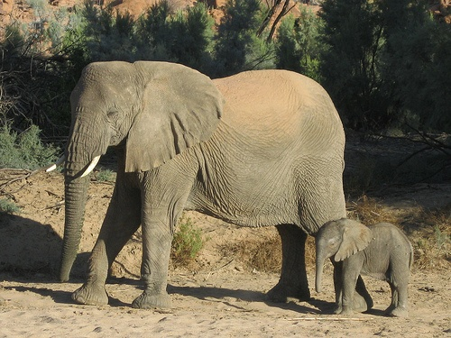 Desert Elephant and Baby in Namibia Photo: Guy Cowper at Heatheronhertravels.com