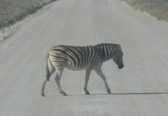 Zebra Crossing at Etosha National Park, Namibia Photo: Guy Cowper at Heatheronhertravels.com