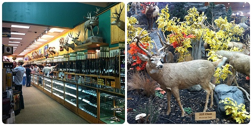 Cabela's Hunting Store at  Buda, Texas Photo: Heatheronhertravels.com