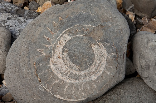 Fossils on the Jurassic coast in Dorset