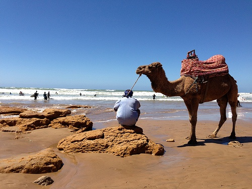 Camel on the beach at Taghazout, Morocco Photo: Heatheronhertravels.com