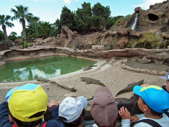 Crocodiles at Lanzarote Rancho Texas Park Photo: Rancho Texas Lanzarote Park of Flickr