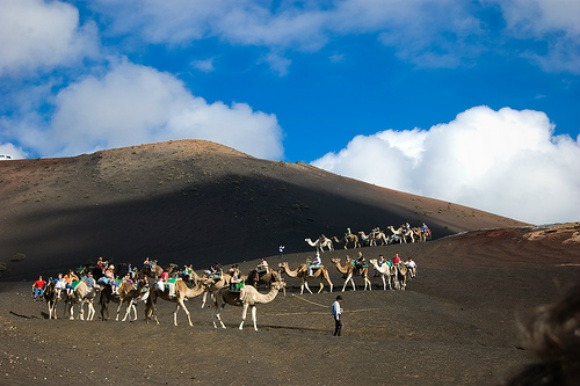 Camels at Timanfaya National Park, Lanzarote Photo: desmetjes of Flickr