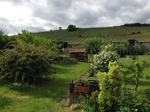Hering Vineyard at Barr in Alsace - Excursion with Lueftner Cruises Photo: Heatheronhertravels.com