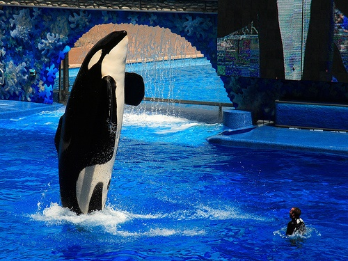 Seaworld Orlando Photo by Limowreck666 on Flickr