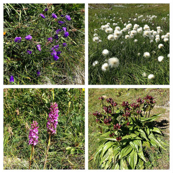Wildflowers on the Tour de Mont Blanc Photo: Heatheronhertravels.com
