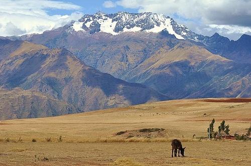 Horses graze in the Andes, Peru Photo: Jonathan Lillie