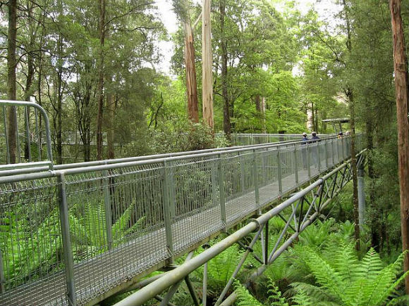 Beginning of the Otway Fly Tree Top Walk Photo: Marie of Flickr