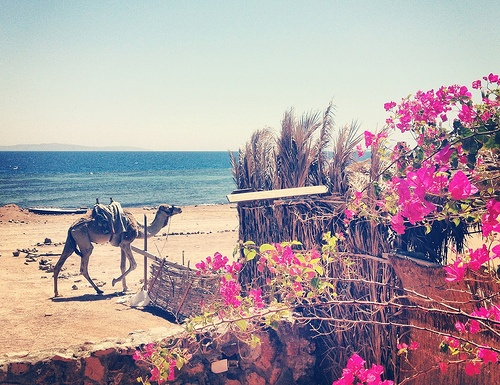 On the beach in Dahab, Egypt Photo: Mina Mahrous (Dainute)
