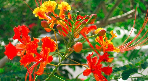 Colourful flowers on the Camana Way Photo: squirrelmachine.org