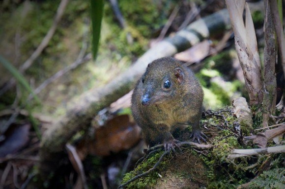 "A very friendly Borneo mountain squirrel who made a ""meep meep"" sound like roadrunner"