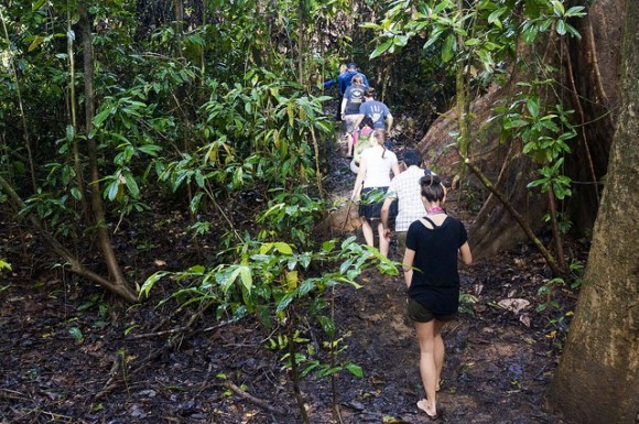 He did a good job of spotting an Orangutan in a tree back from the river so we ditched the boat and went for a bare foot trek through the jungle to find him