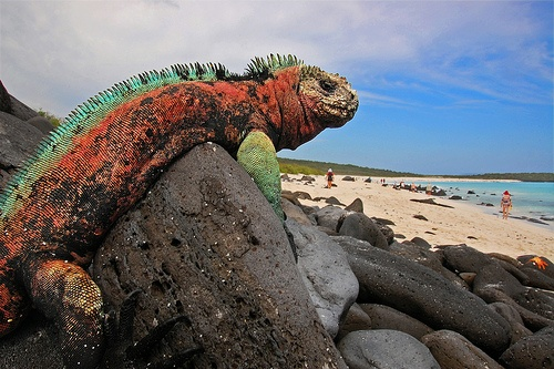 Galapagos in Ecuador Photo: Blinking Idiot on Flickr