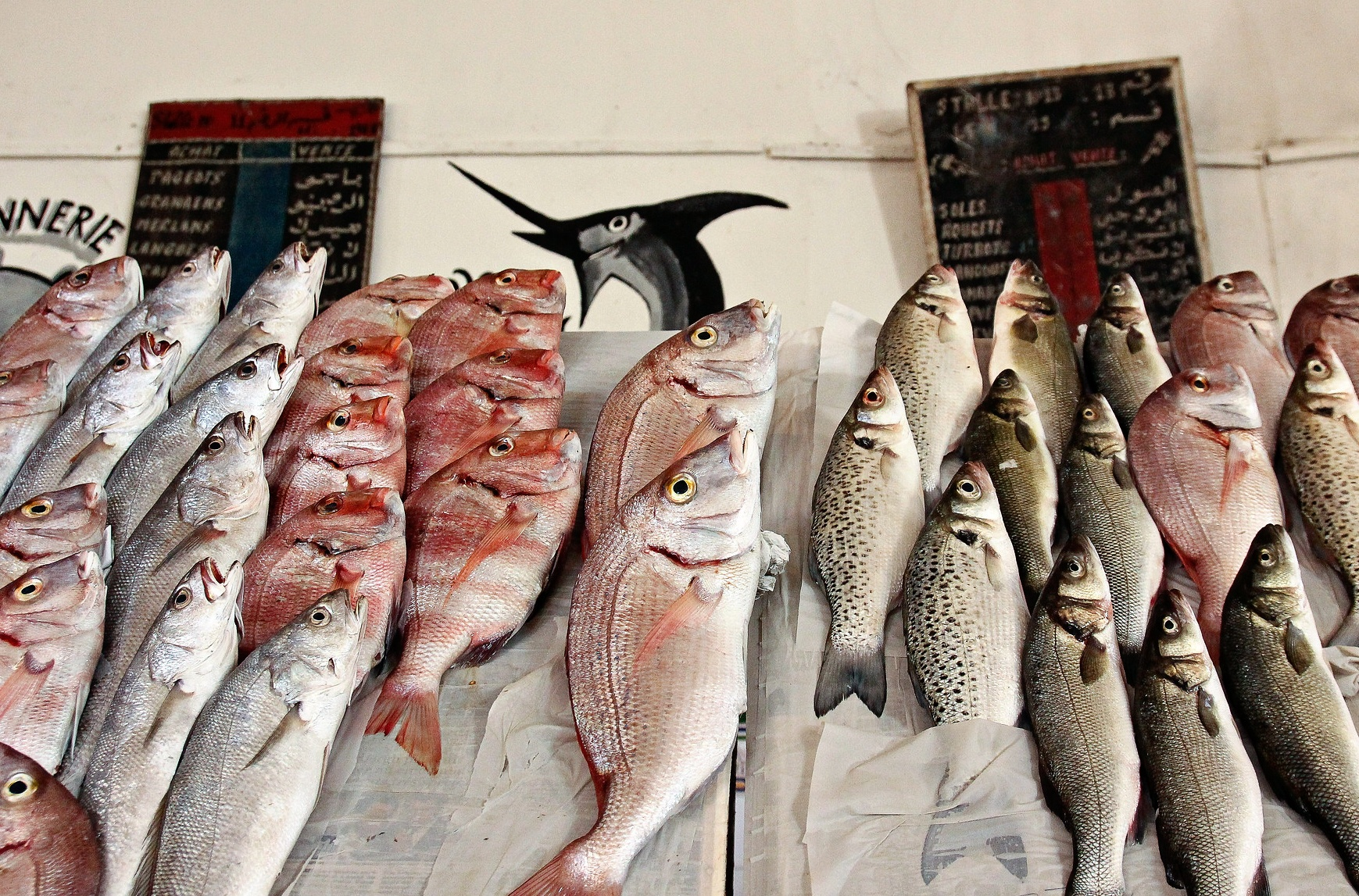 Casablanca fish by Magalie Abbe on Flickr