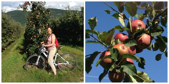 Apple time in South Tyrol cycling through the orchards at Lake Caldaro / Kaltern Photo: Heatheronhertravels.com