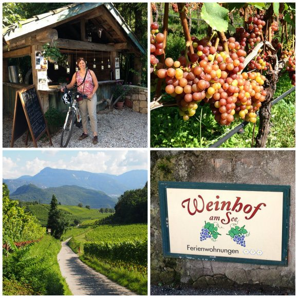 Exploring the small vineyards of the wine road in South Tyrol near Lake Caldaro / Kaltern Photo: Heatheronhertravels.com