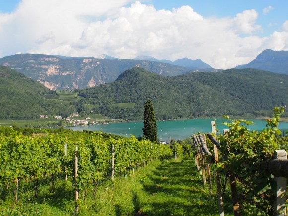 View of the vineyards by Lake Caldaro / Kaltern in South Tyrol Photo: Heatheronhertravels.com