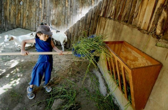 Helping out with the animals at Bioparco in Rome Photo: Bioparco.it