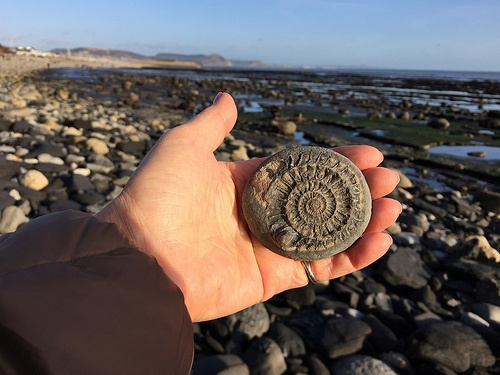 Ammonite I found at Lyme Regis Photo: Heatheronhertravels.com