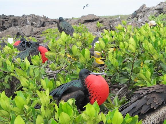Galapagos 6
