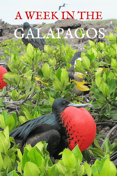 Read about Dancing with Darwin - a week in the Galapagos