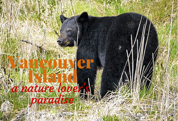Vancouver Island – A Nature Lover's Paradise