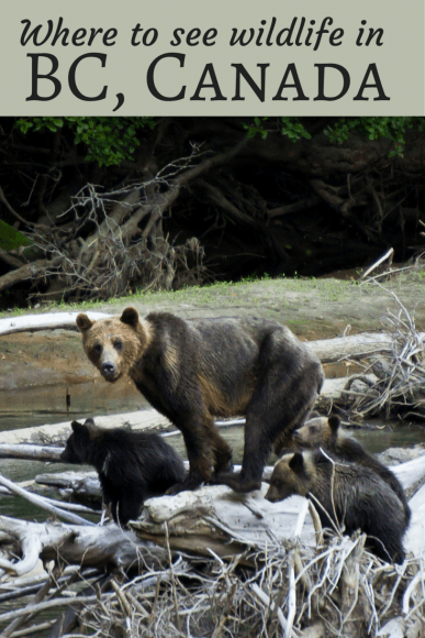 Where to see wildlife in BC Canada