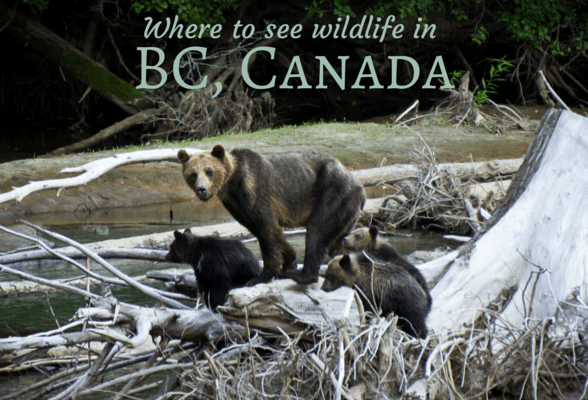 Where to Watch Wildlife in British Columbia, Canada