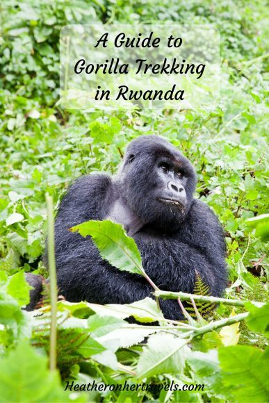 Read about gorilla trekking in Rwanda