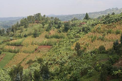 Gorilla Treking in Rwanda Photo: Audley Travel