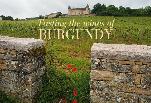 Tasting the wines of Burgundy