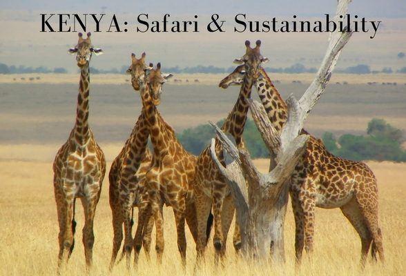 Safari and sustainability: making a change in Kenya